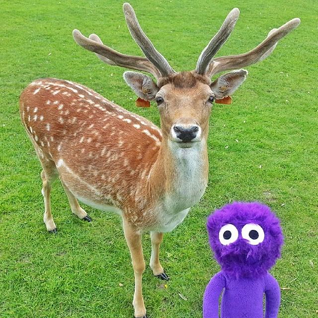 kukla-sureyya-irlanda-dublin-phoenix-park-geyik